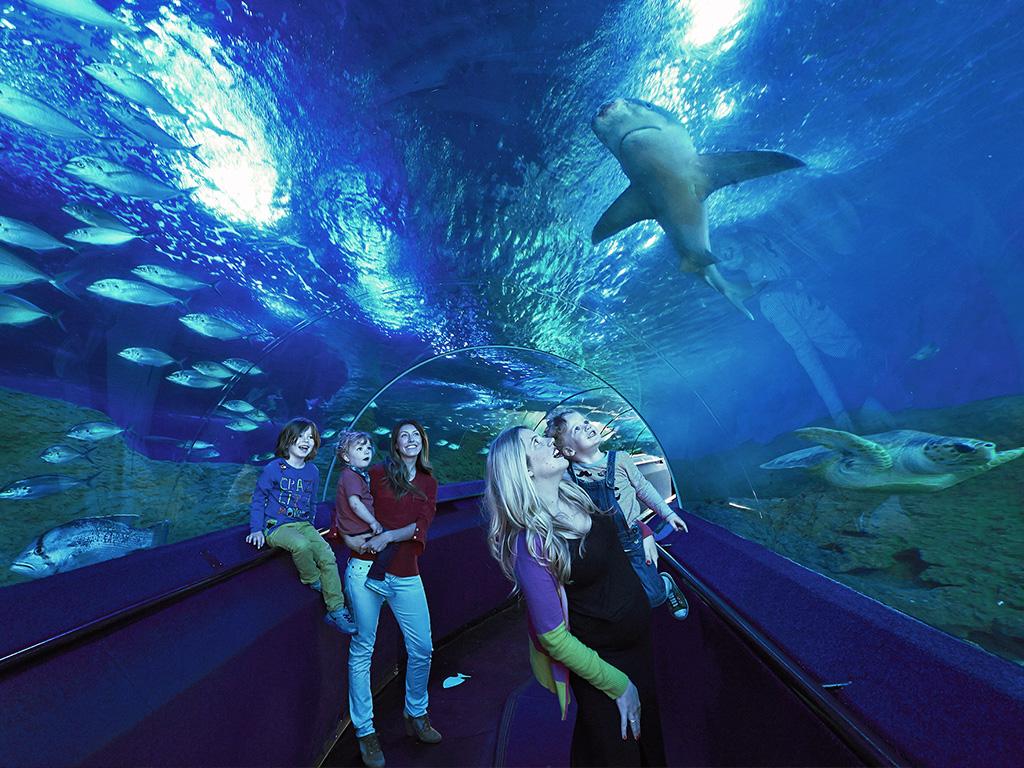 10 Largest Aquariums In The World - pepNewz