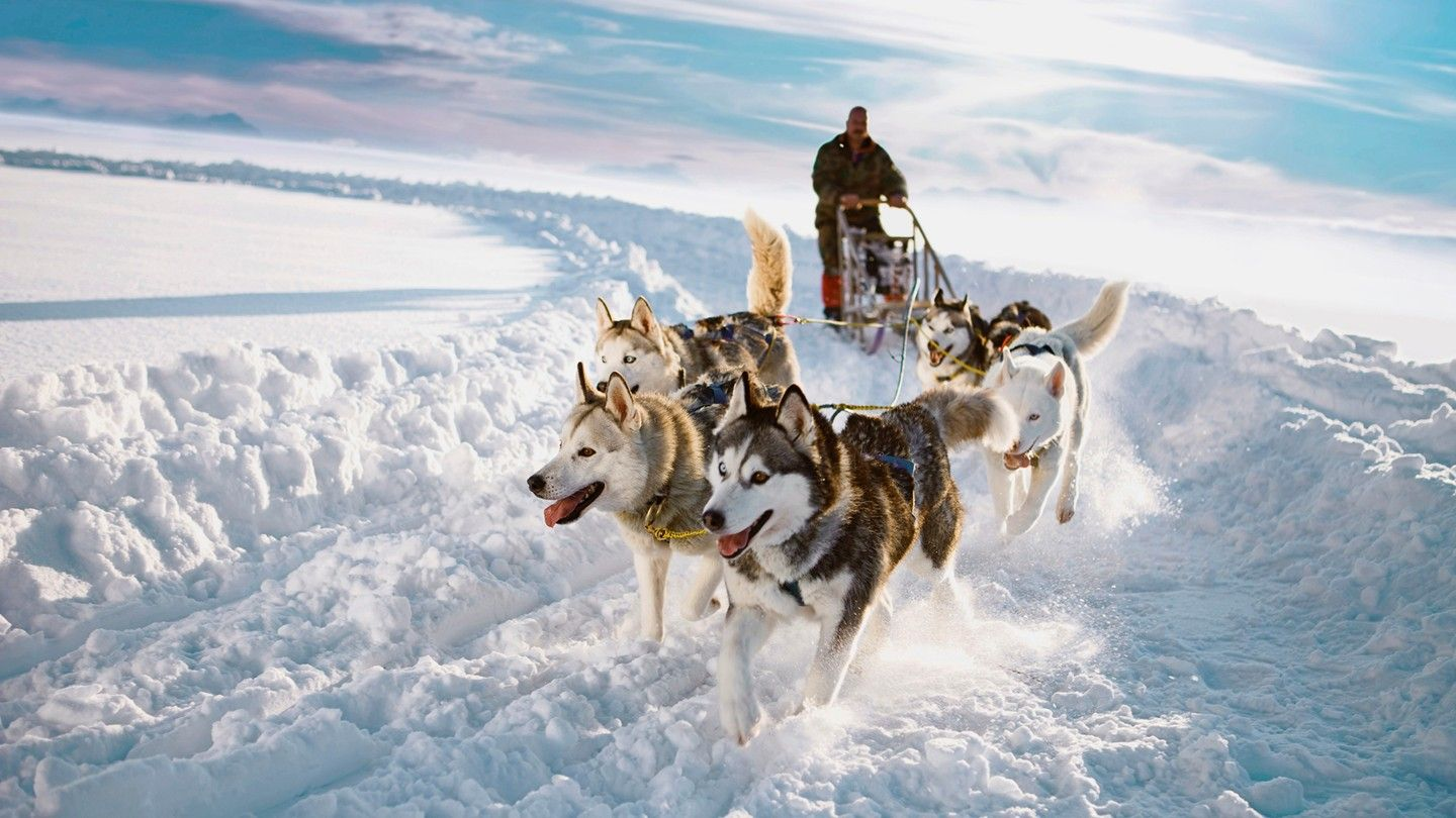 Dog Sledding in Jukkasjarvi, Sweden