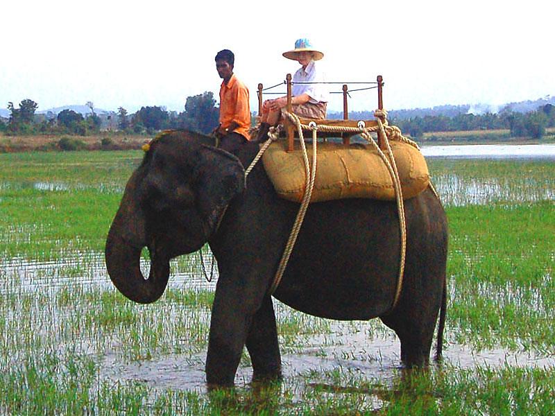 Elephant Safari in Kabini