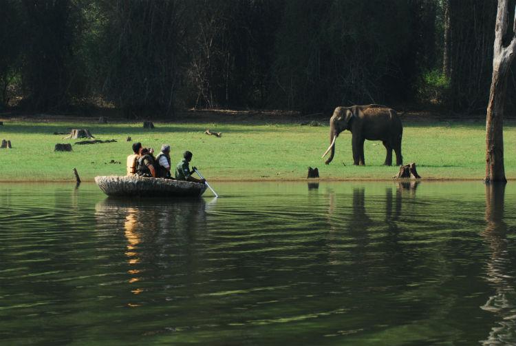 Jungle Safari in Kabini